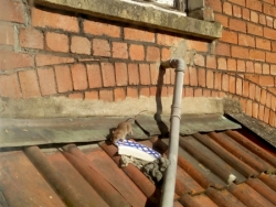 Bristol Rats Pest Control