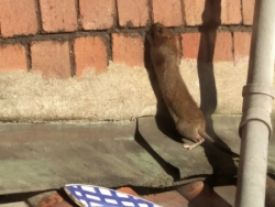 Pest Control Rats Bristol