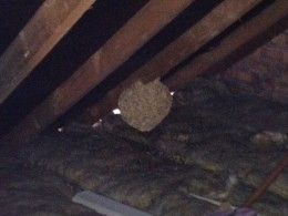 Bristol Wasp Nest Removal