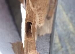 Wood Worm Pest Removal Bristol