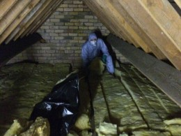 Remove Rats From Loft Bristol